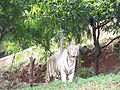 Indira Gandhi Zoological Park.JPG