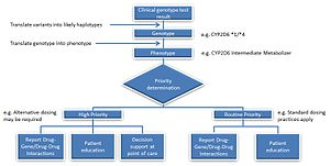 Pharmacogenomics - Image: Intermediate Metabolizer Genotype to Reporting Process Example
