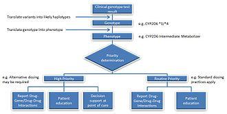 Pharmacogenomics - Image: Intermediate Metabolizer Genotype to Reporting Process Example