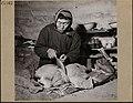 Inuit woman in an igloo making kamiit (sealskin boots), Inukjuak, Quebec Une femme inuite fabrique des kamiit (bottes en peau de phoque) dans un igloo à Inukjuak, au Québec (31163278870).jpg