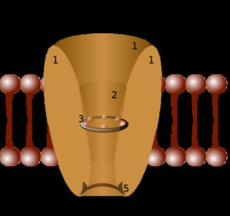 Saluran ion