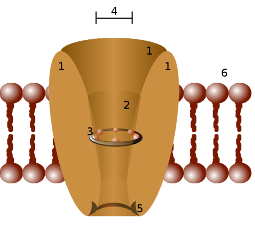 Ion channel