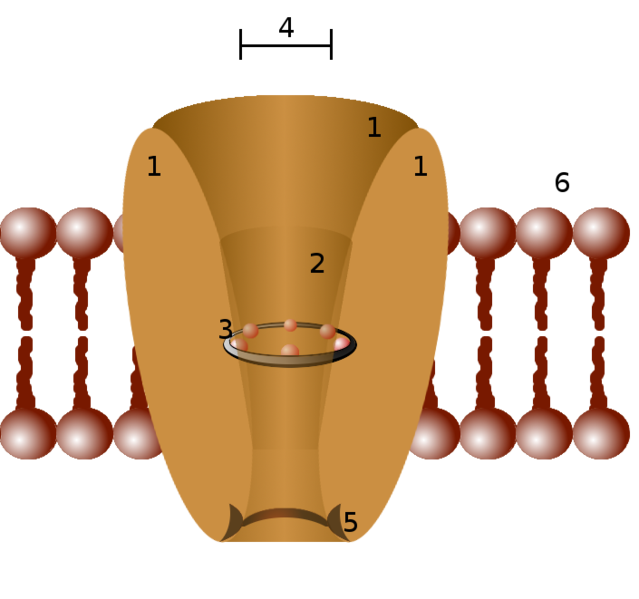 File:Ion channel.png