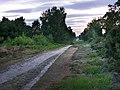 Iping Common, dusk - geograph.org.uk - 1441789.jpg