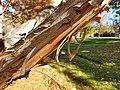 Jack Nicklaus Park (formerly Parkway Park) (30969264866).jpg