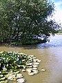Janesmoor Pond - geograph.org.uk - 862246.jpg