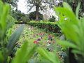 Jardim Botanico da Ajuda (13985670636).jpg