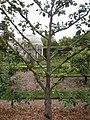 Jardin Albert Kahn, Boulogne-Billancourt (9970261483).jpg