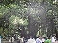 Jardin botanique Alger, 2012 (08).JPG