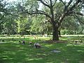 Jax FL Evergreen Cem09.jpg