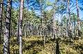 Jersikas pagasts, Latvia - panoramio (10).jpg