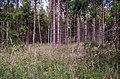 Jersikas pagasts, Latvia - panoramio (24).jpg