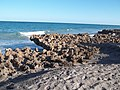 Jupiter FL Coral Cove Park beach05.jpg