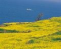 KOCIS Jeju Island (5982713763).jpg