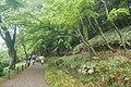 Kairaku-en-ibaraki-path2-2019-4-30.jpg