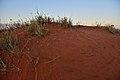 Kalahari landscape, Kalahari, Northern Cape, South Africa (19917409433).jpg