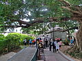 Kam Tin Tree House - 2007-09-30 14h09m42s SN200816.jpg