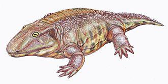 Kamacops - Restoration of Kamacops acervalis