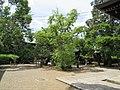 Kamigoryo-jinja 046.jpg