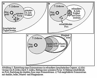 """Mantle zone - Image labeled in German, but """"Mantel-zone"""" visible near center."""