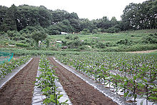 Keisen university education farm.jpg