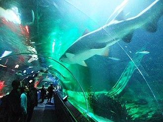 Tamaki Drive - Kelly Tarlton Aquarium