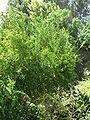 Kibutz Yagur IMG 2917.JPG