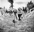 Klepanje z otrokom, pri Toncu, Vino 1948.jpg