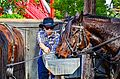 Knott's Berry Farm Wells Fargo Lines Stagecoach (24839184010).jpg