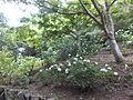 Kobe Municipal Arboretum in 2013-6-22 No,115.JPG
