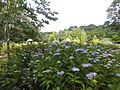 Kobe Municipal Arboretum in 2013-6-22 No,33.JPG