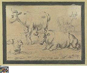 Koeien en schapen in de weide