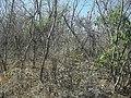 Komchén (Mérida), Yucatán (16).jpg
