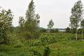 Kreis Pinneberg, Naturschutzgebiet WDPA-ID 165841 Tävsmoor-Haselauer Moor 01.jpg