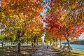 L'automne au Vieux-Port de Montréal (15276698288).jpg