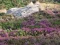 La lande bretonne... - panoramio.jpg