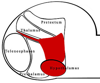 Zona limitans intrathalamica