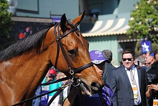 Lady Eli American-bred Thoroughbred racehorse