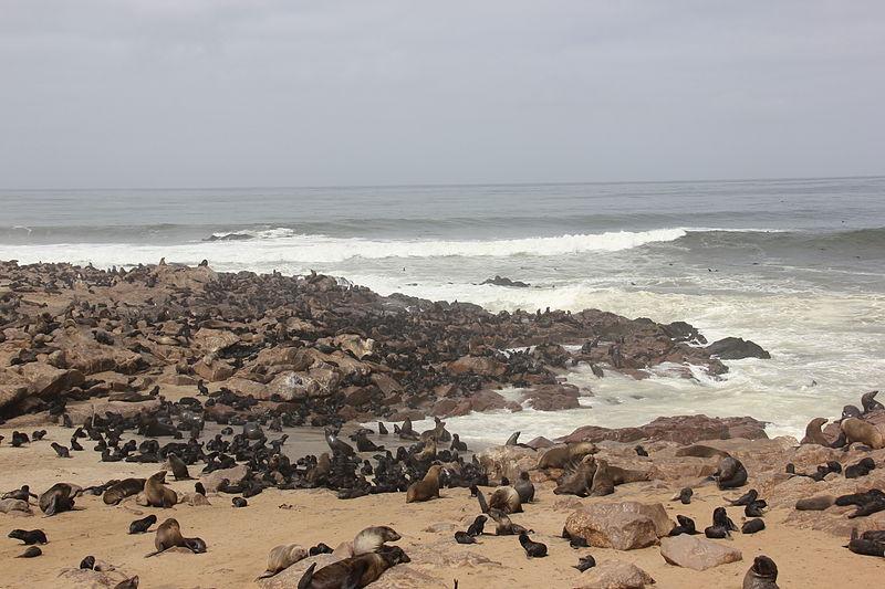 File:Laika ac Cape Cross (8506440114).jpg