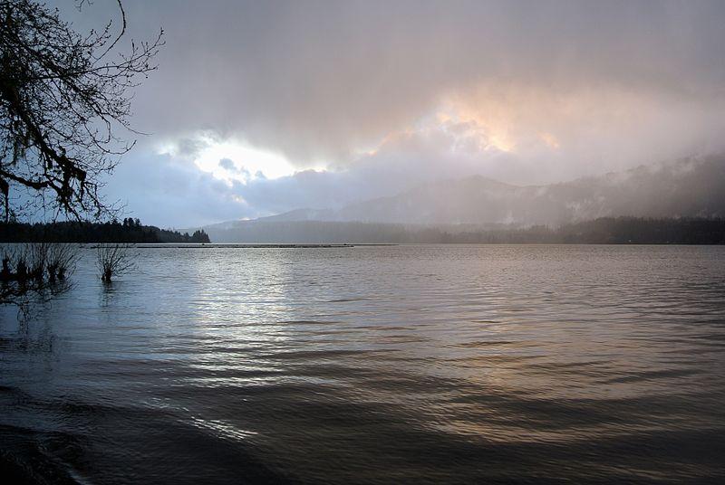 Lake Quinault Mist.jpg