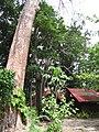 Lam Kaen, Thai Mueang District, Phang-nga, Thailand - panoramio (6).jpg