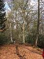 Landgoed Valkenberg DSCF2970.JPG