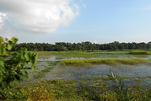 Narsingdi District - Image: Landscape of Narsingdi District (08)