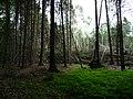Landschaftsschutzgebiet Horstmanns Holz Melle -Waldende- Datei 1.jpg