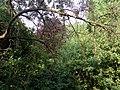 Landschaftsschutzgebiet Wäldchen bei Buer Melle Datei 24.jpg