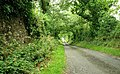Lane near Hillsborough - geograph.org.uk - 879490.jpg