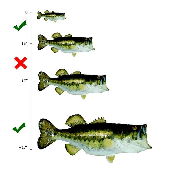 Bass Fish Diagram - Wiring Diagram •