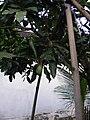 Lebaran 2010 - panoramio (3).jpg