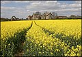Leiston Abbey in Springtime - geograph.org.uk - 1588476.jpg