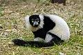 Lemur (26992410478).jpg